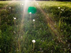 Glowing Dandelions