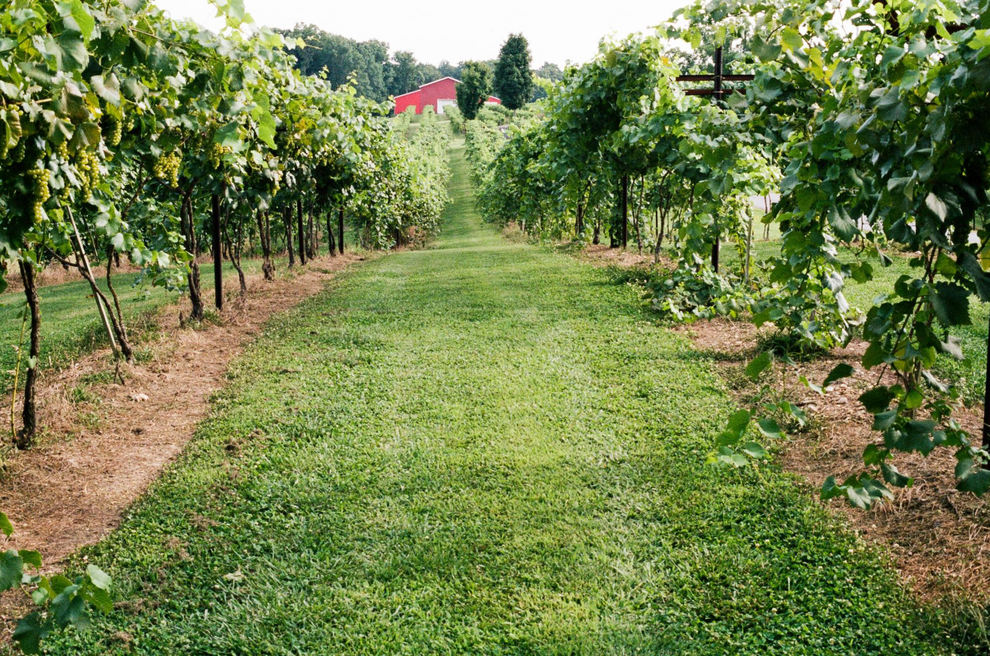 Amber Falls Winery and Cellars in Hampshire, Tennessee